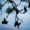 Rookery Reflection