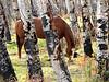 Horse in Aspen