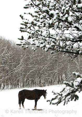 Horse in High Country Snow
