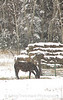 Snowy Horse and Hay