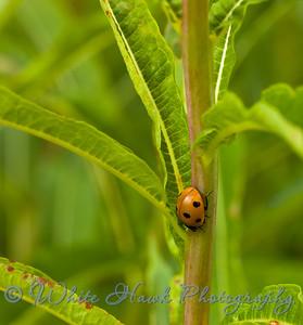 Ladybug crawling on plant