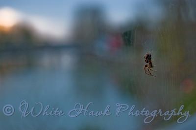 Spider on web hanging over river