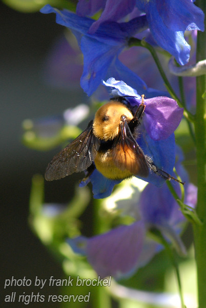 A bee looking for nectar