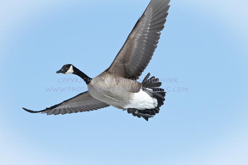 Birds6March 04, 2010D. John Huenink5184 x 3456
