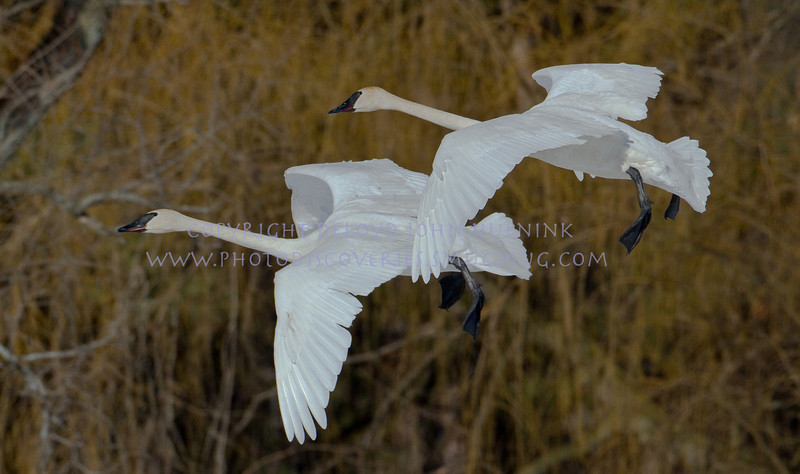 Birds1March 04, 2010D. John Huenink5184 x 3456