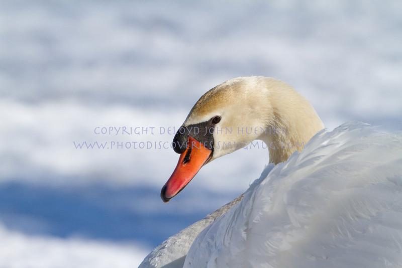Birds11March 04, 2010D. John Huenink5184 x 3456