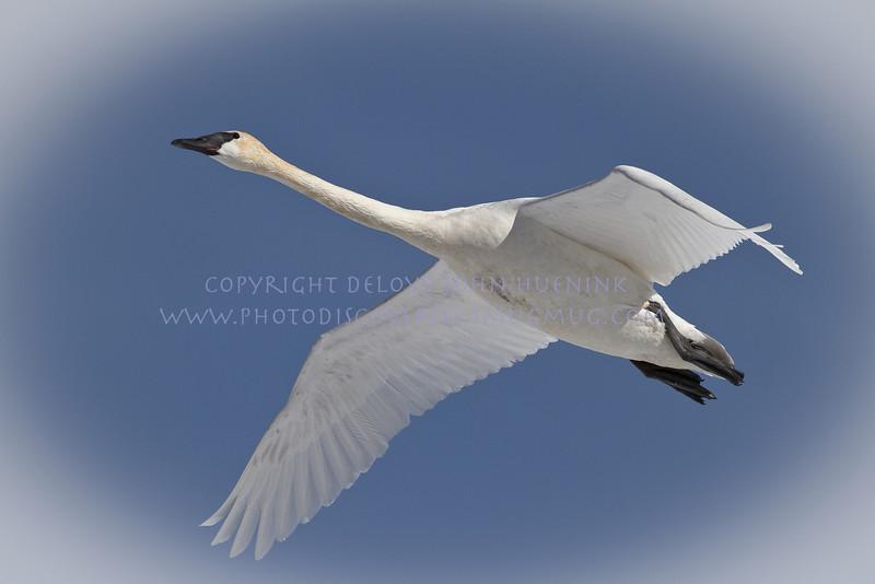Birds4March 04, 2010D. John Huenink5184 x 3456