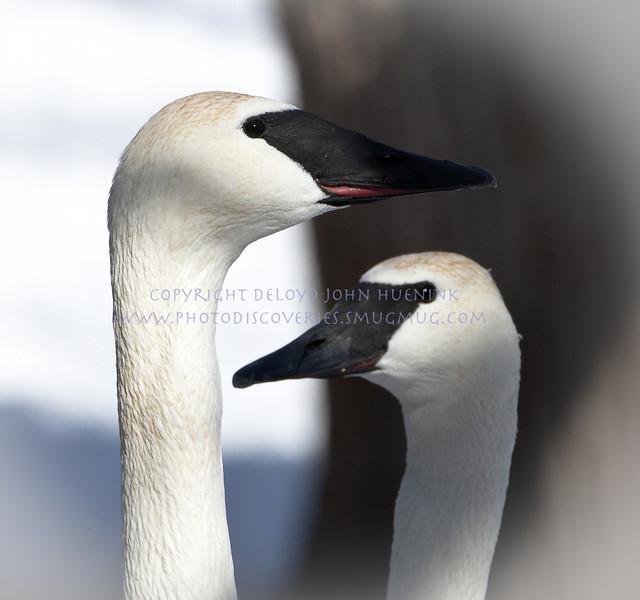 Birds8March 04, 2010D. John Huenink5184 x 3456