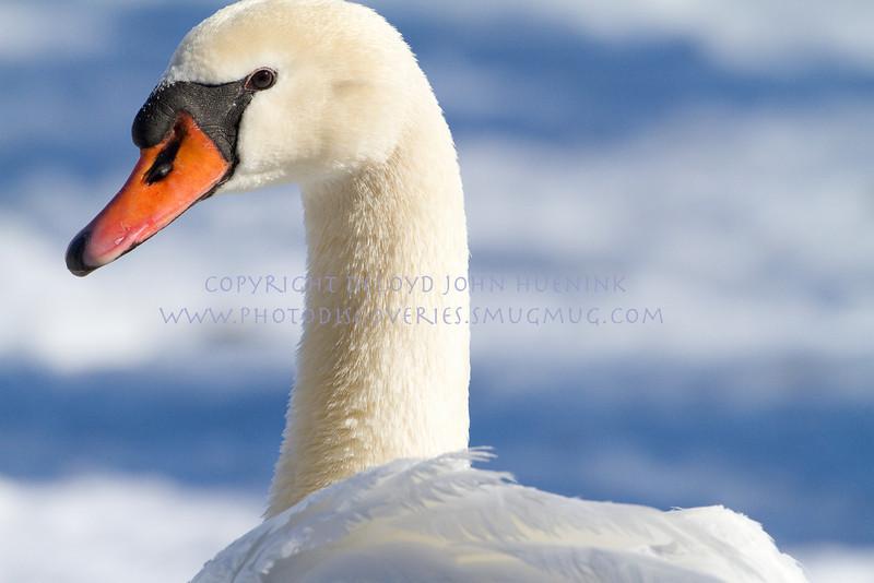 Birds10March 04, 2010D. John Huenink5184 x 3456