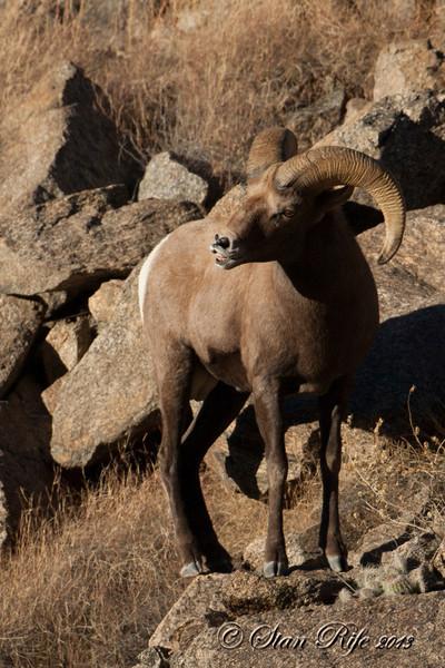 Big Horn valley, Colorado November 2013