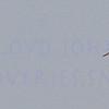 soft cranes-0528