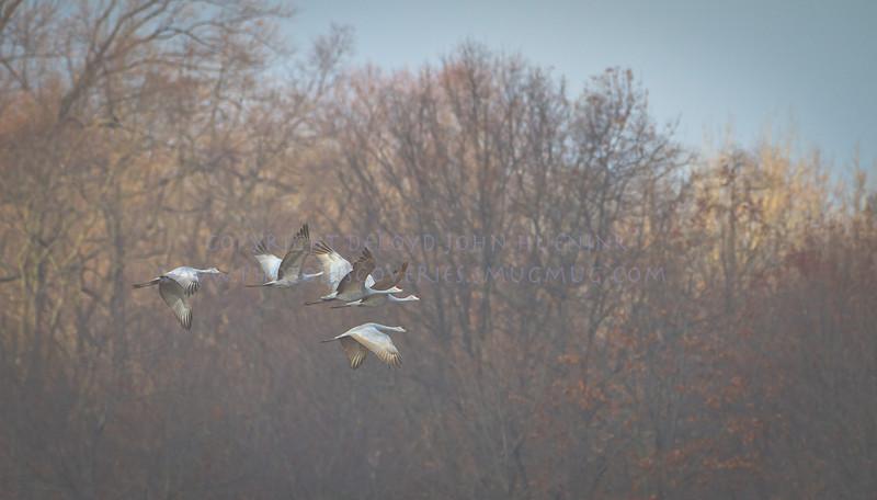 soft cranes-0650