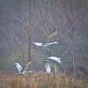soft cranes-0642