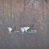 soft cranes-0649