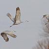 soft cranes-0498