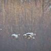 soft cranes-0648