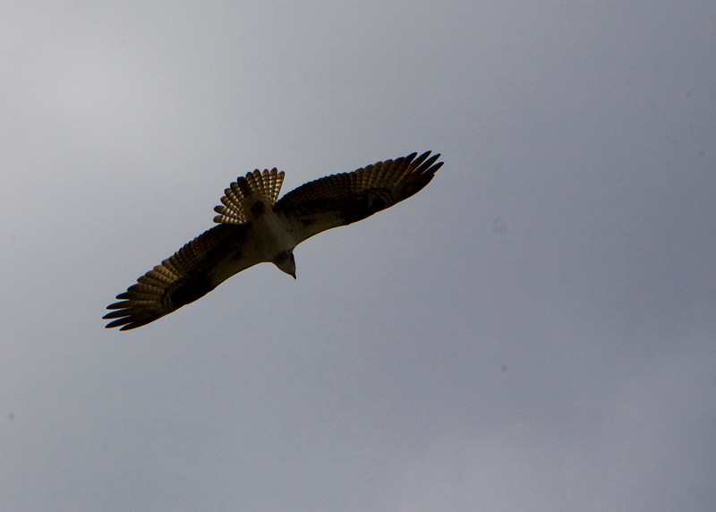 Osprey Cloud