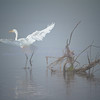 Foggy Flight...