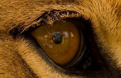 Caspers eye reflections
