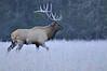 Wildlife : Natures Community