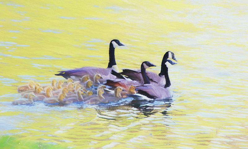 Chalk_geese