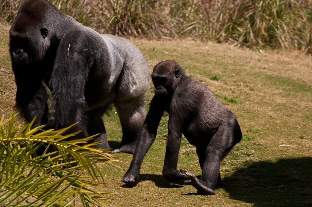 2010.04.28 Murphy Ranch zoo field trip 050