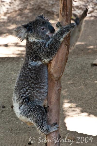 2010.04.28 Murphy Ranch zoo field trip 031