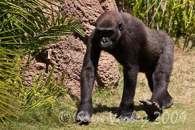 2010.04.28 Murphy Ranch zoo field trip 051
