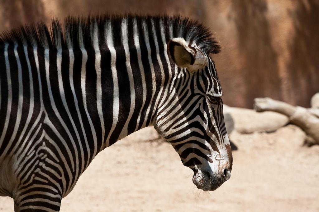 2010.04.28 Murphy Ranch zoo field trip 078