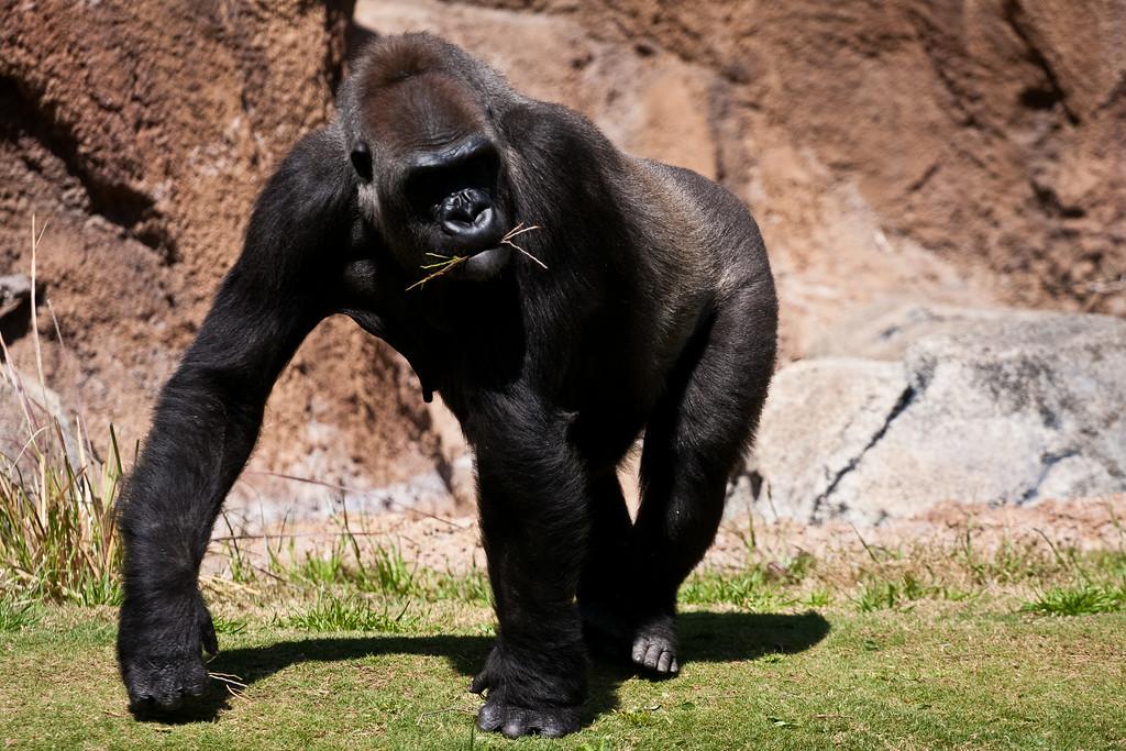2010.04.28 Murphy Ranch zoo field trip 049