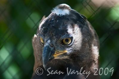 2010.04.28 Murphy Ranch zoo field trip 105