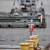 A Laughing Gull watches as the Cameron Ferry gets set to cross the ship channel with its cargo.