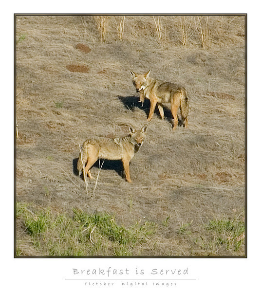 Coyote_Lunch_9204-2