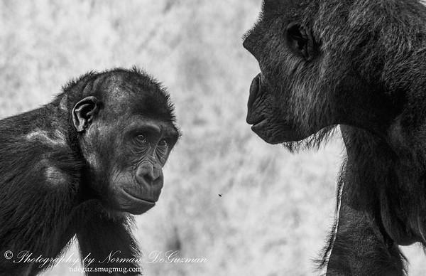 Safari Park, Escondido