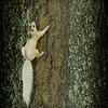 Brevard College  White Squirrel