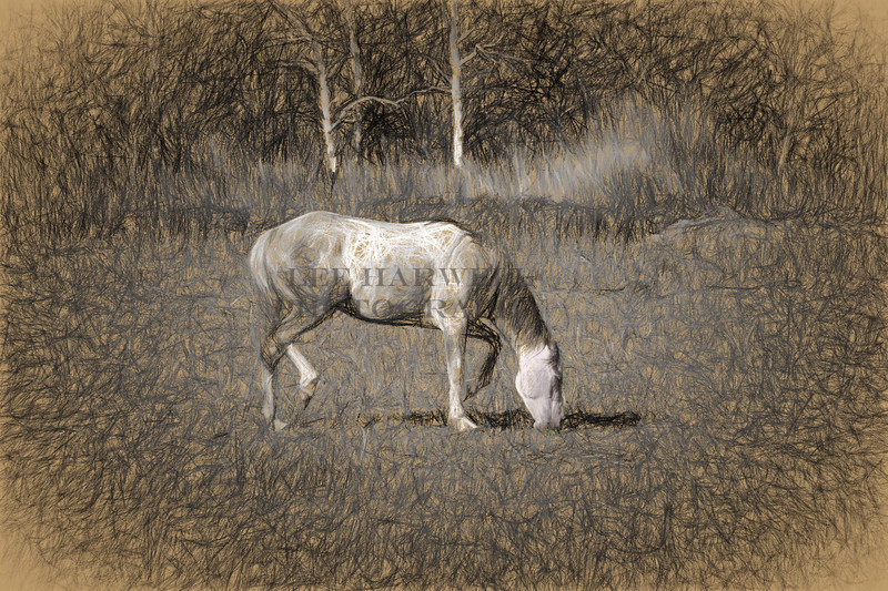 Grazing in the Pasture