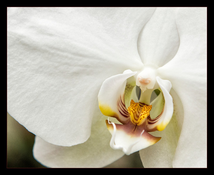 White Orchid<br /> <br /> Botanical Gardens, Buffalo NY 2013
