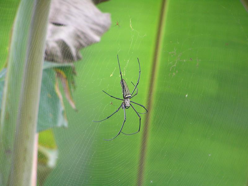 spider bali aug 2010