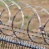 Bluebirds: 2 male and 1 female perched on barbed/razor wire - Charlotte Airport -December 6, 2013