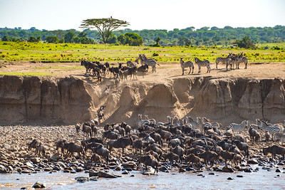 The Great Migration Crossing