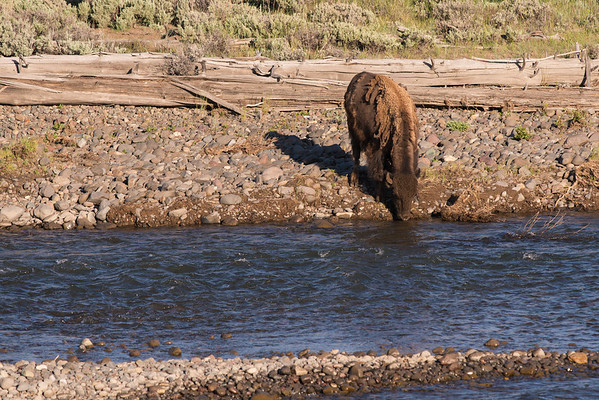 Having a Drink, Yellowstone