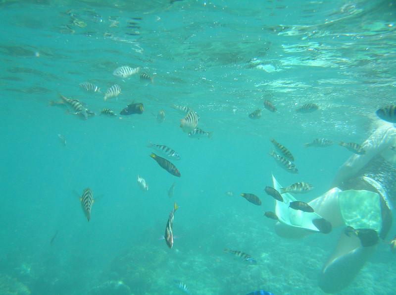 fish ocean 8 bali aug 2010