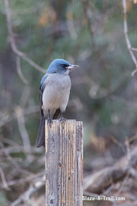 Madera Canyon Birds