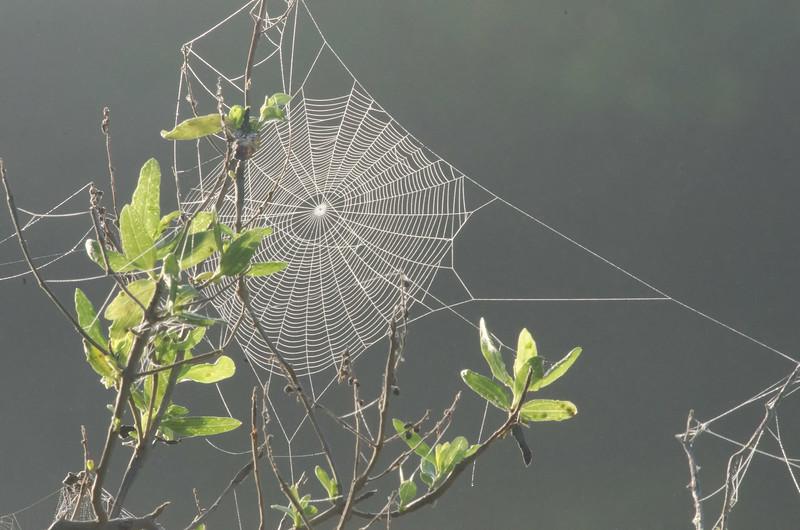 Spider web at Bulow Creek