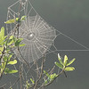 Spider web at Bulow Creek