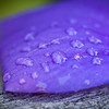 Water Droplets on Purple Flower