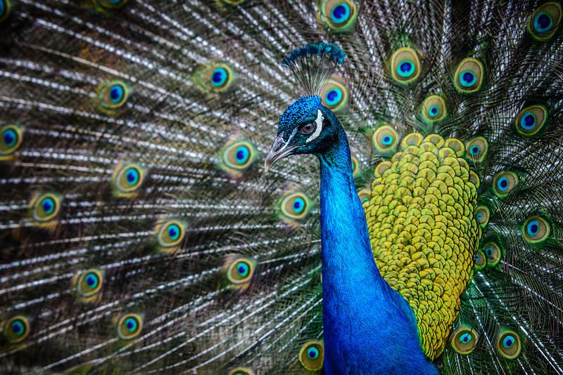 IMAGE: http://www.akh-photography.com/Nature/Wildlife/i-BSZr2Dg/1/L/20130608-DSC_3616-L.jpg