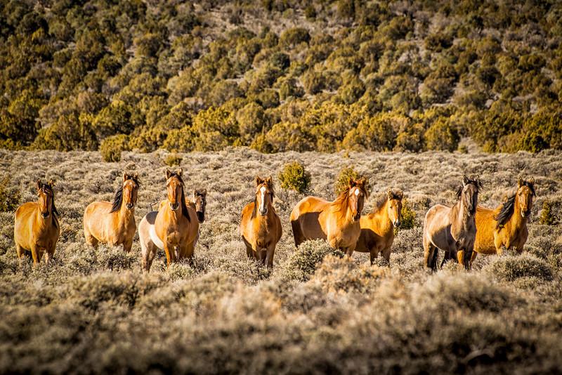 Wild Horses of Smith Creek Valley