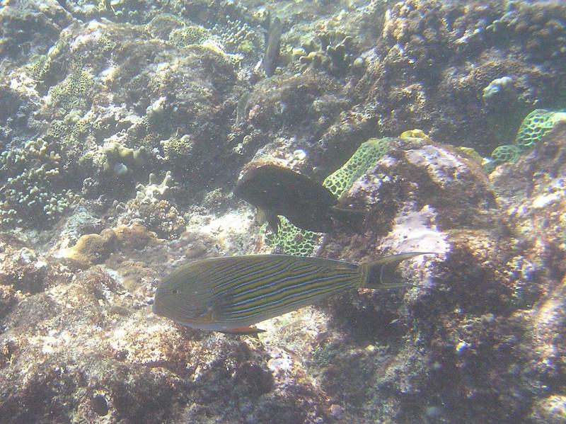 fish ocean 18 bali aug 2010