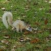 White Squirrel on Brevard College Campus